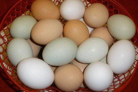 cara agar rambut cepat panjang telur