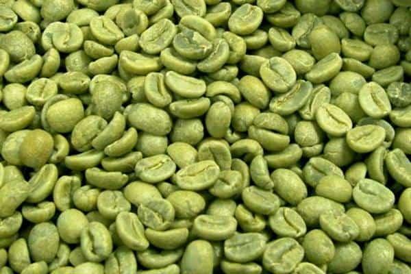 manfaat kopi hijau bagi tubuh