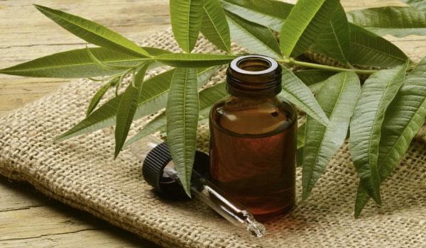 Tea Tree Oil Tips Menghilangkan Jerawat di Punggung