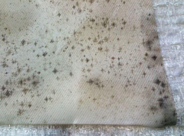 Cara Menghilangkan Noda Jamur pada Pakaian