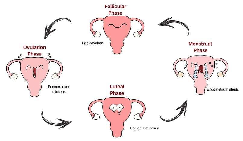 Kelainan Siklus Menstruasi