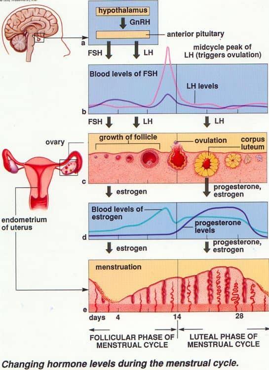 Peran Hormon-hormon